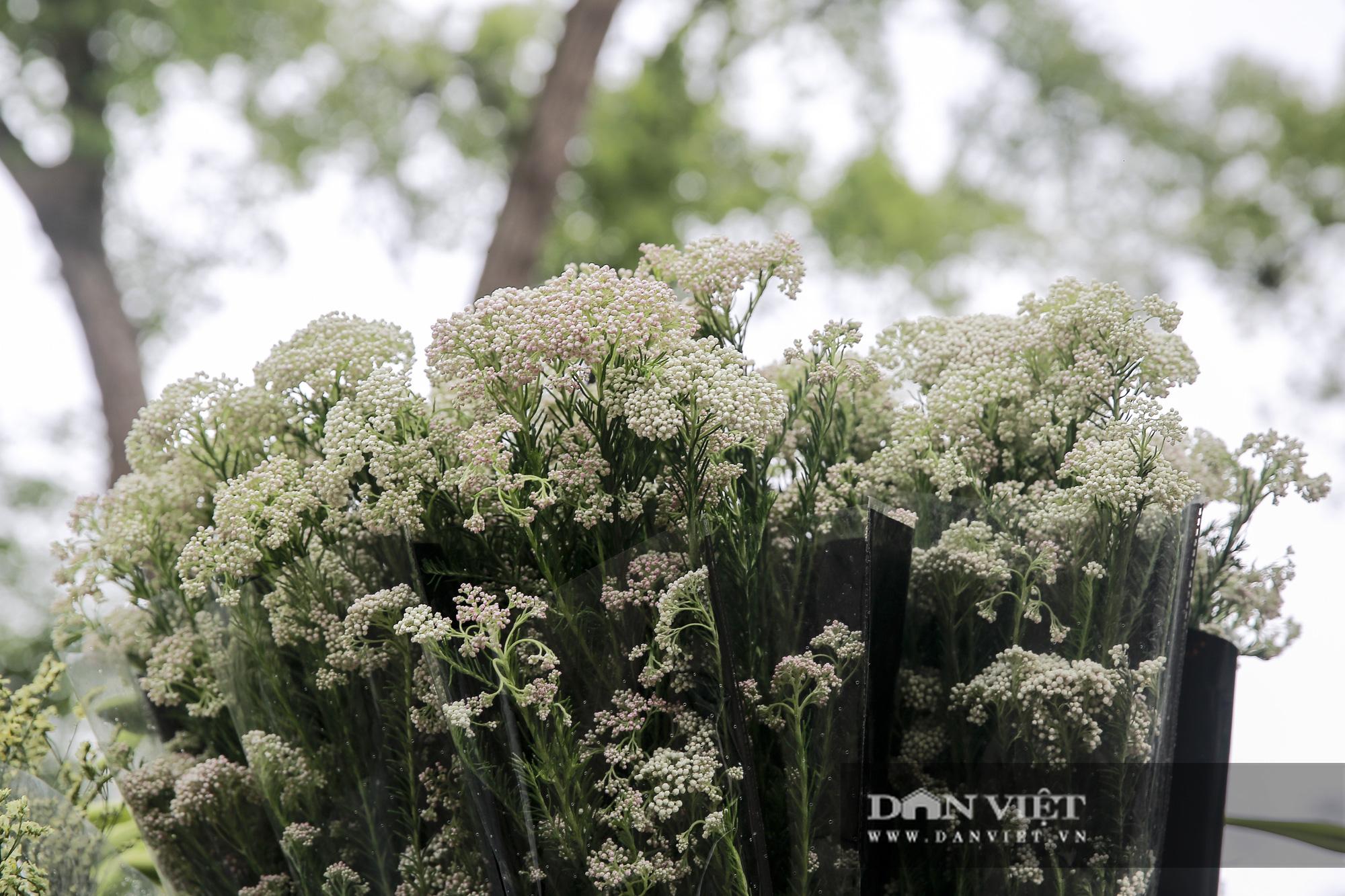 Người Hà Nội phát sốt với loài hoa nhập ngoại mới - Ảnh 2.