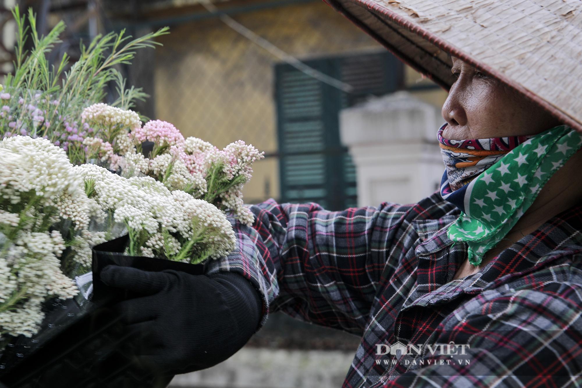 Người Hà Nội phát sốt với loài hoa nhập ngoại mới - Ảnh 3.