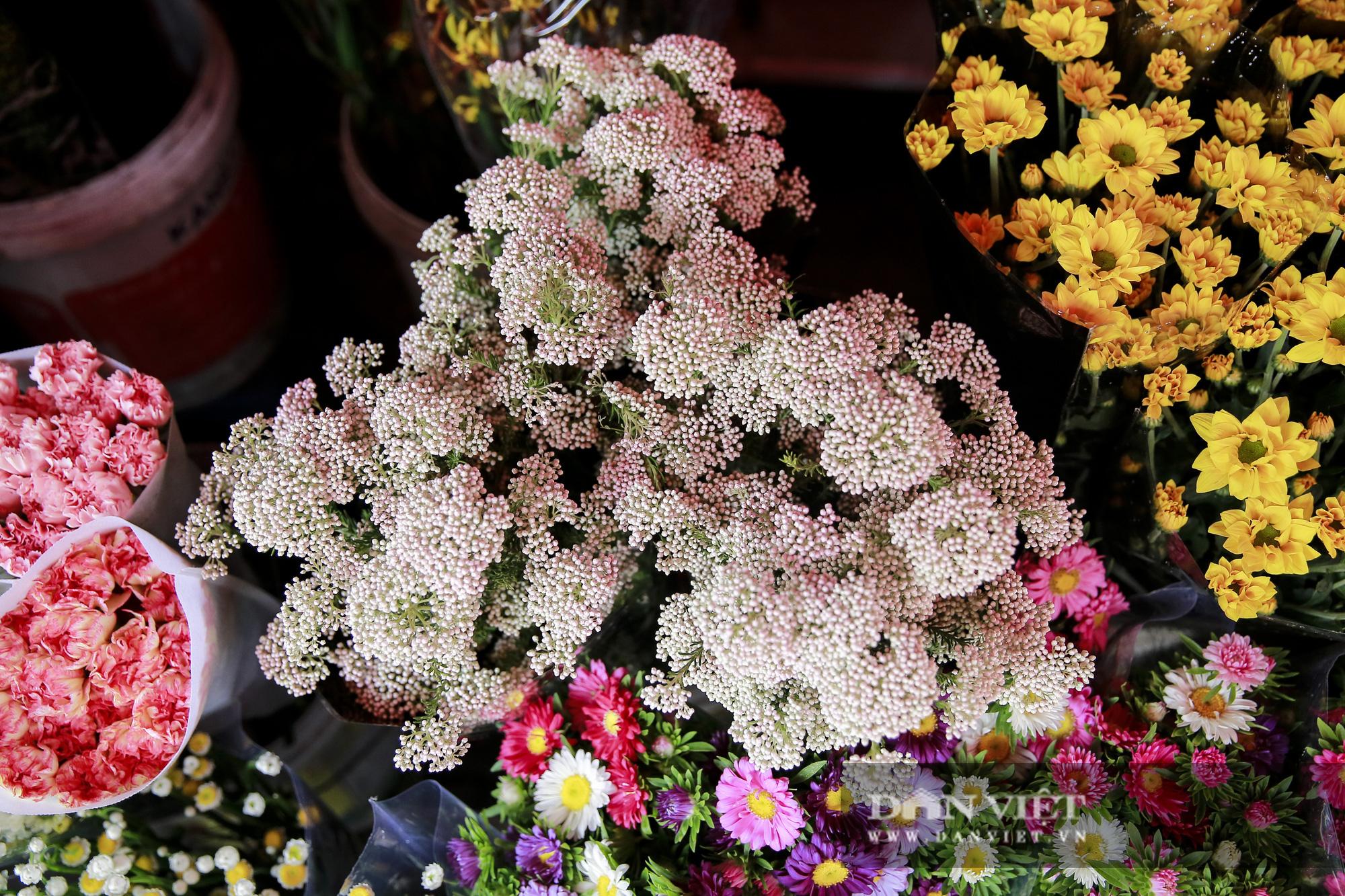 Người Hà Nội phát sốt với loài hoa nhập ngoại mới - Ảnh 8.