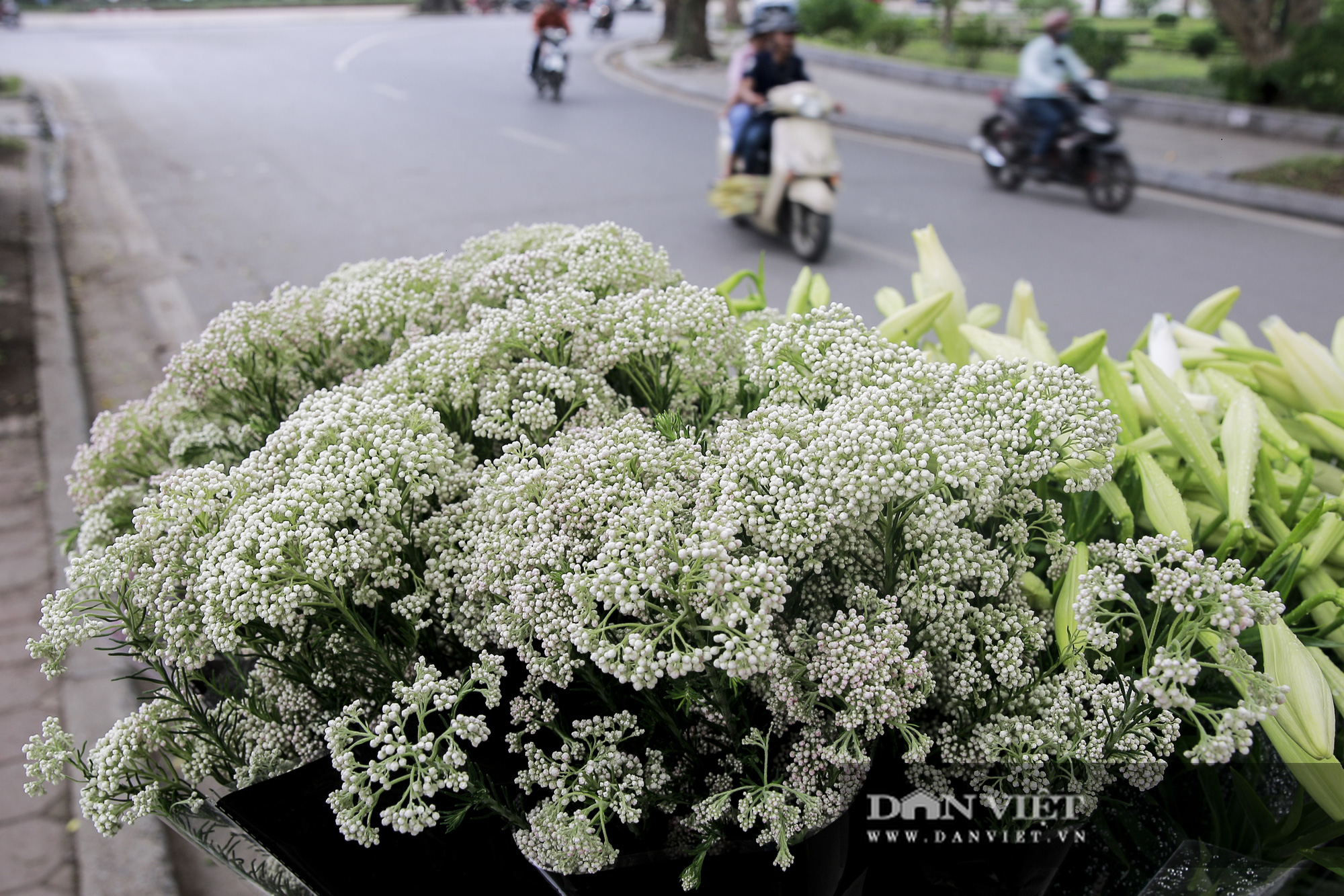 Người Hà Nội phát sốt với loài hoa nhập ngoại mới - Ảnh 9.
