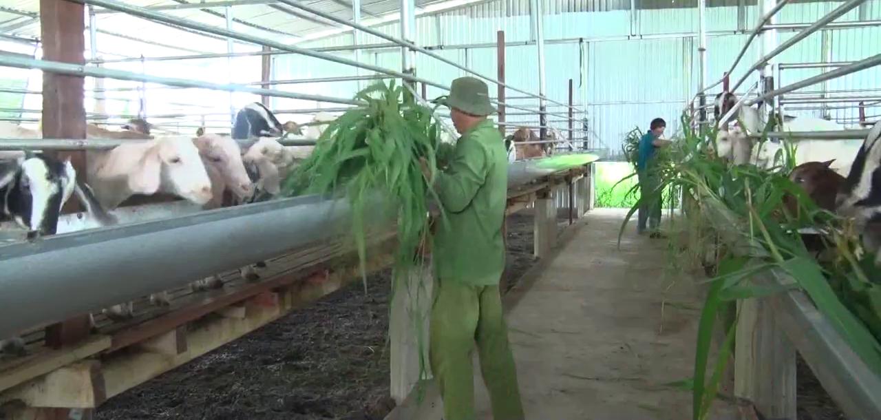 Đồng Nai: Thấy vỗ béo con khoái khẩu lá so đũa thu tiền tỷ, nông dân rầm rộ xây chuồng, mua giống về nuôi - Ảnh 2.