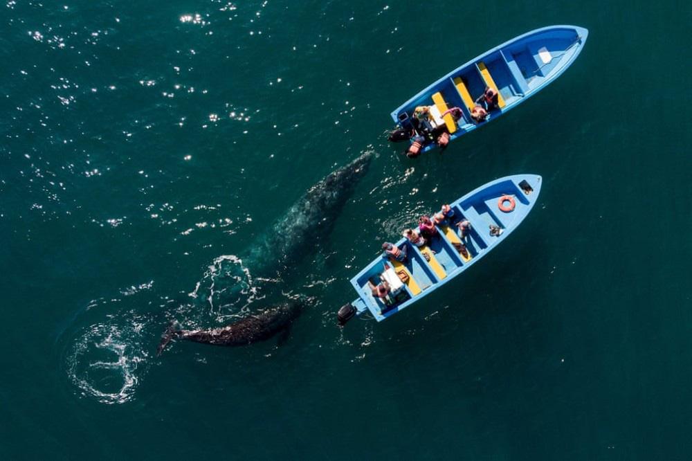 Trải nghiệm chơi đùa cùng cá voi xám khổng lồ ở Mexico - Ảnh 2.