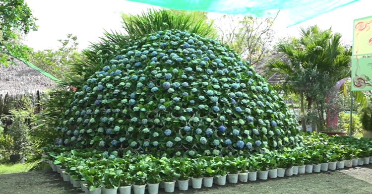 Choáng: Bó hoa cẩm tú cầu khổng lồ cao gần 5 mét được kết từ 1.000 chậu hoa ở Sa Đéc - Ảnh 1.