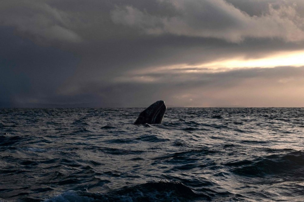 Trải nghiệm chơi đùa cùng cá voi xám khổng lồ ở Mexico - Ảnh 9.