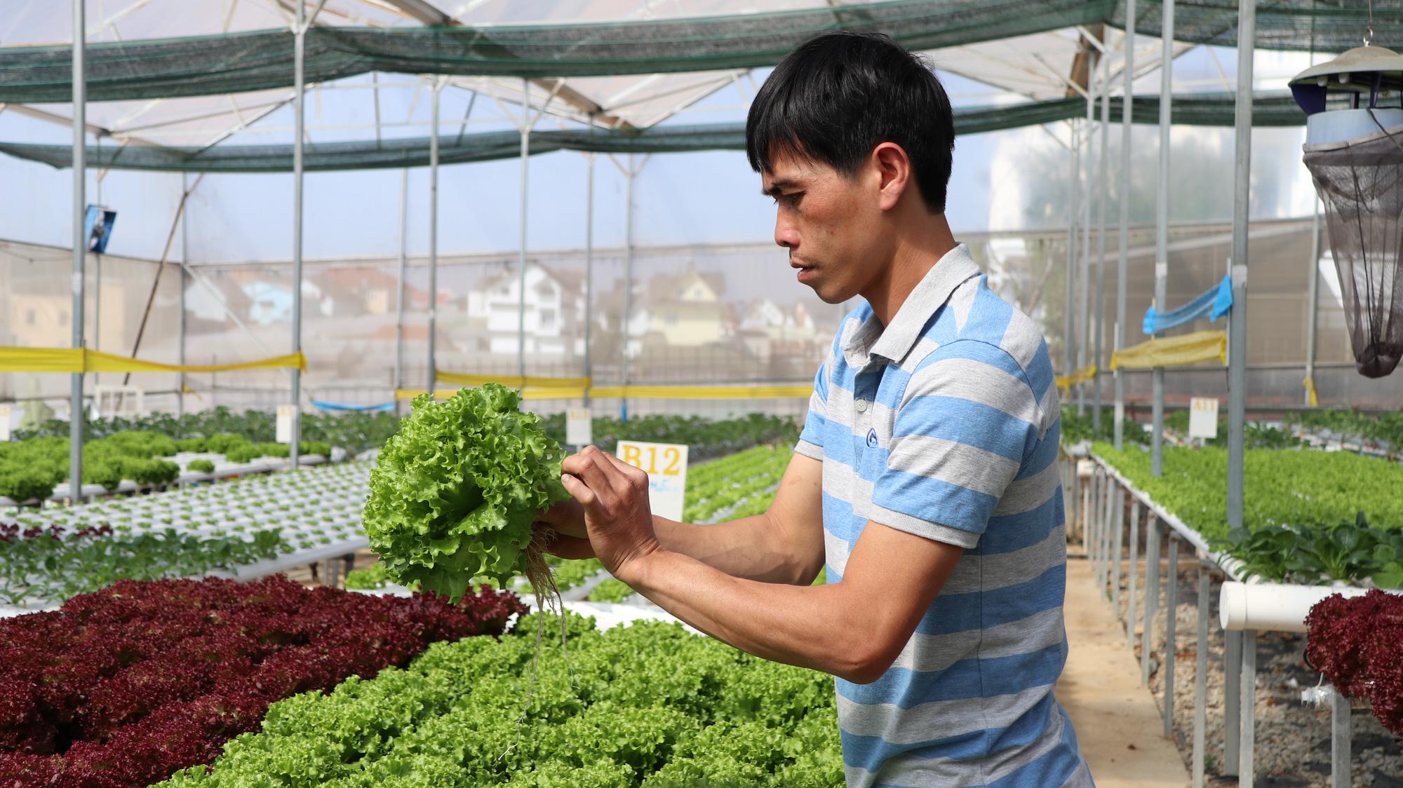 Sự cần thiết của việc xử lý thực phẩm an toàn cho rau sau thu hoạch - Ảnh 4.