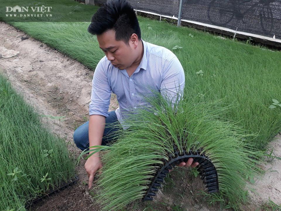 Trồng thứ cây cho hiệu quả hơn nhiều lần cấy lúa mà chuột sợ tránh xa - Ảnh 3.