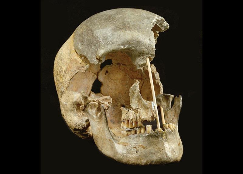 Giới khoa học sửng sốt khi phát hiện DNA cổ xưa nhất trên thế giới - Ảnh 1.
