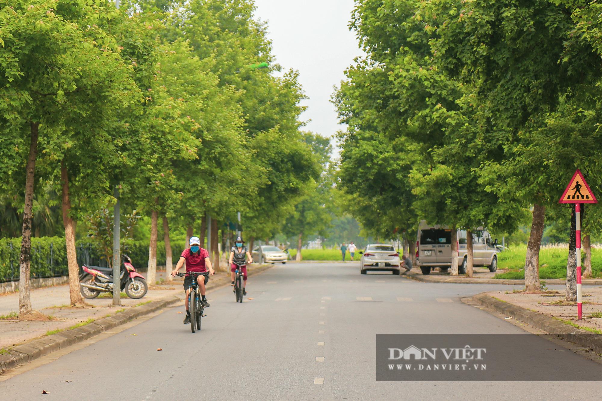 Ngỡ ngàng loài cây giống hệt phong lá đỏ xanh tốt giữa phố Hà Nội - Ảnh 2.
