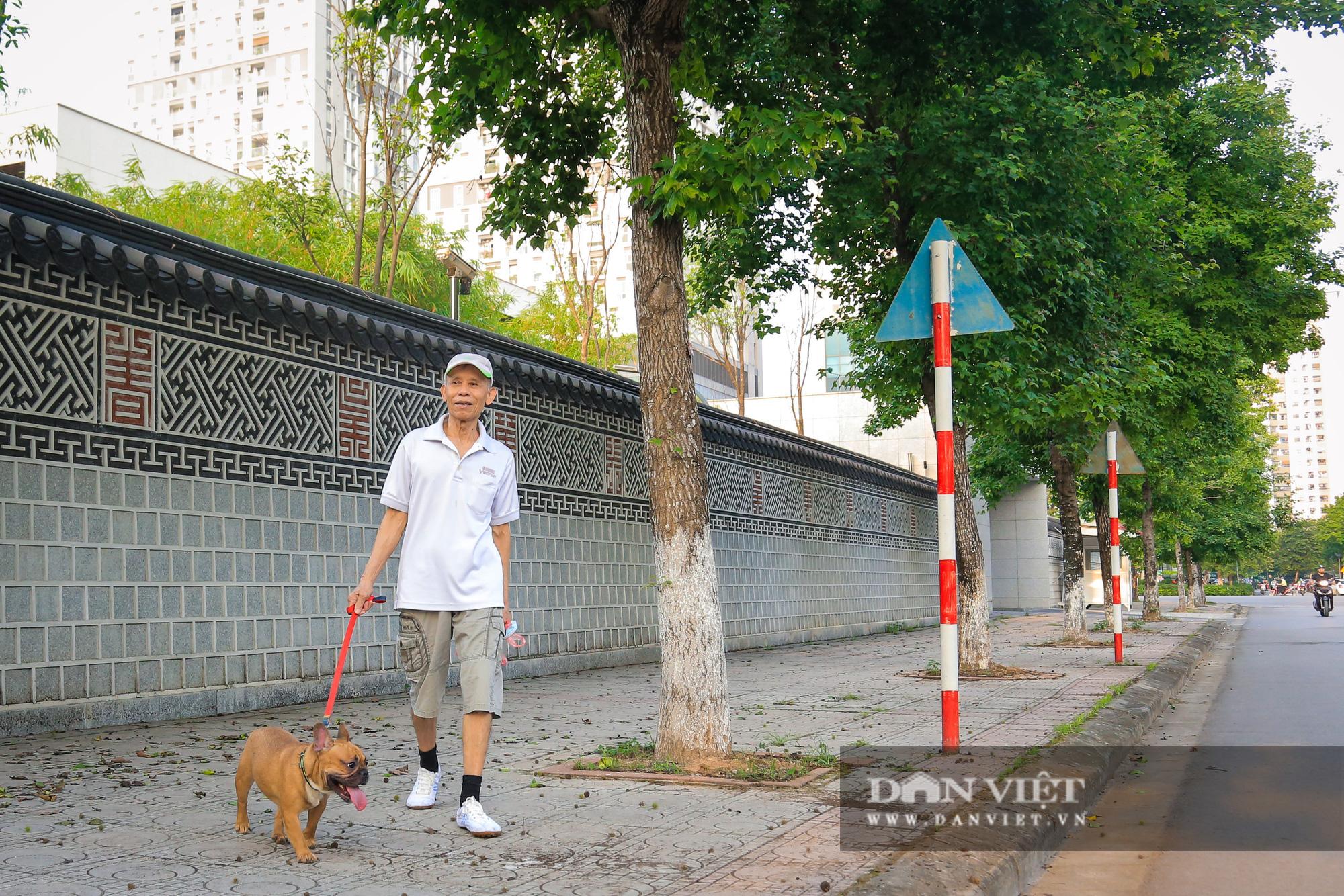 Ngỡ ngàng loài cây giống hệt phong lá đỏ xanh tốt giữa phố Hà Nội - Ảnh 9.