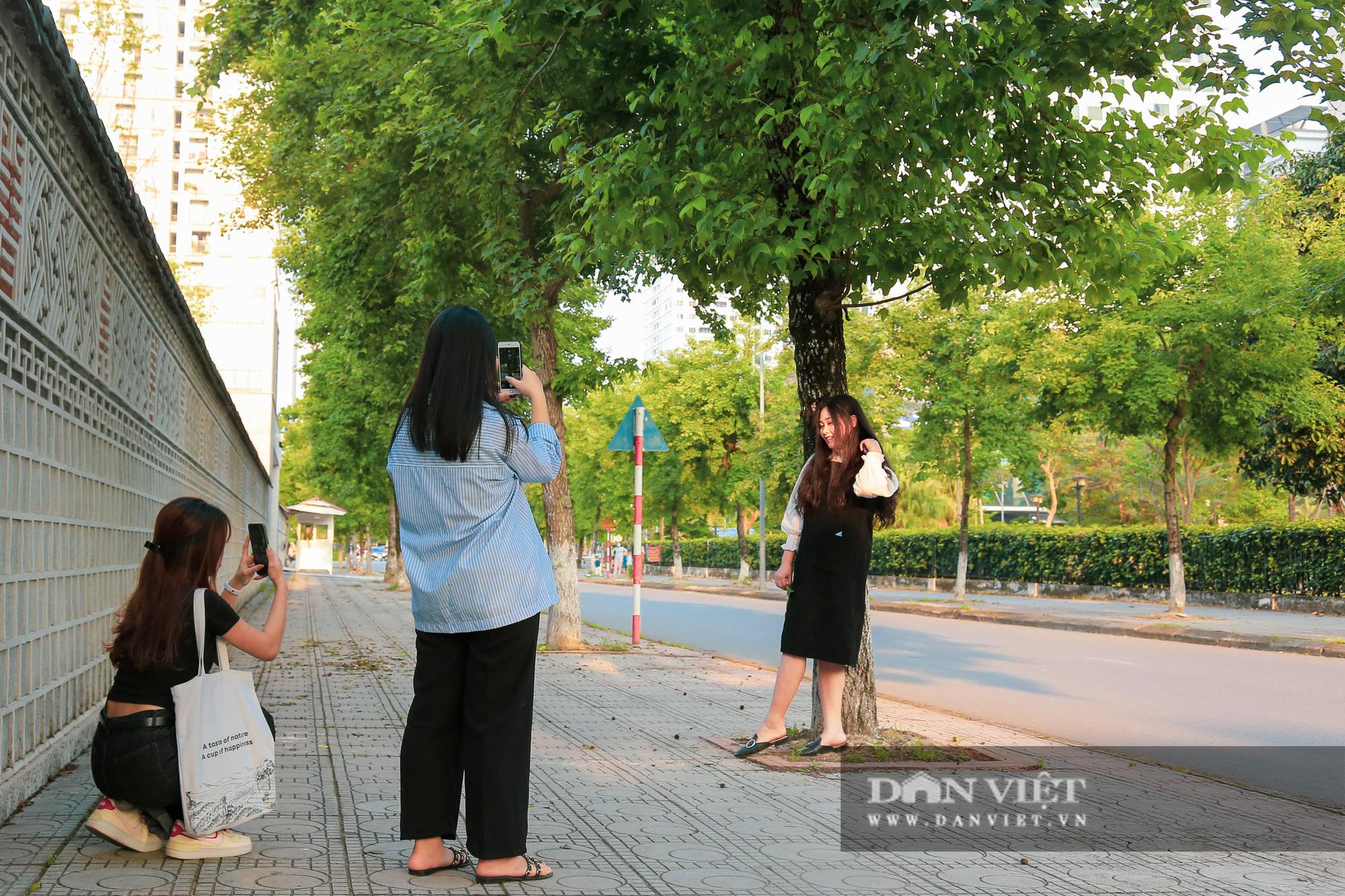 Ngỡ ngàng loài cây giống hệt phong lá đỏ xanh tốt giữa phố Hà Nội - Ảnh 10.