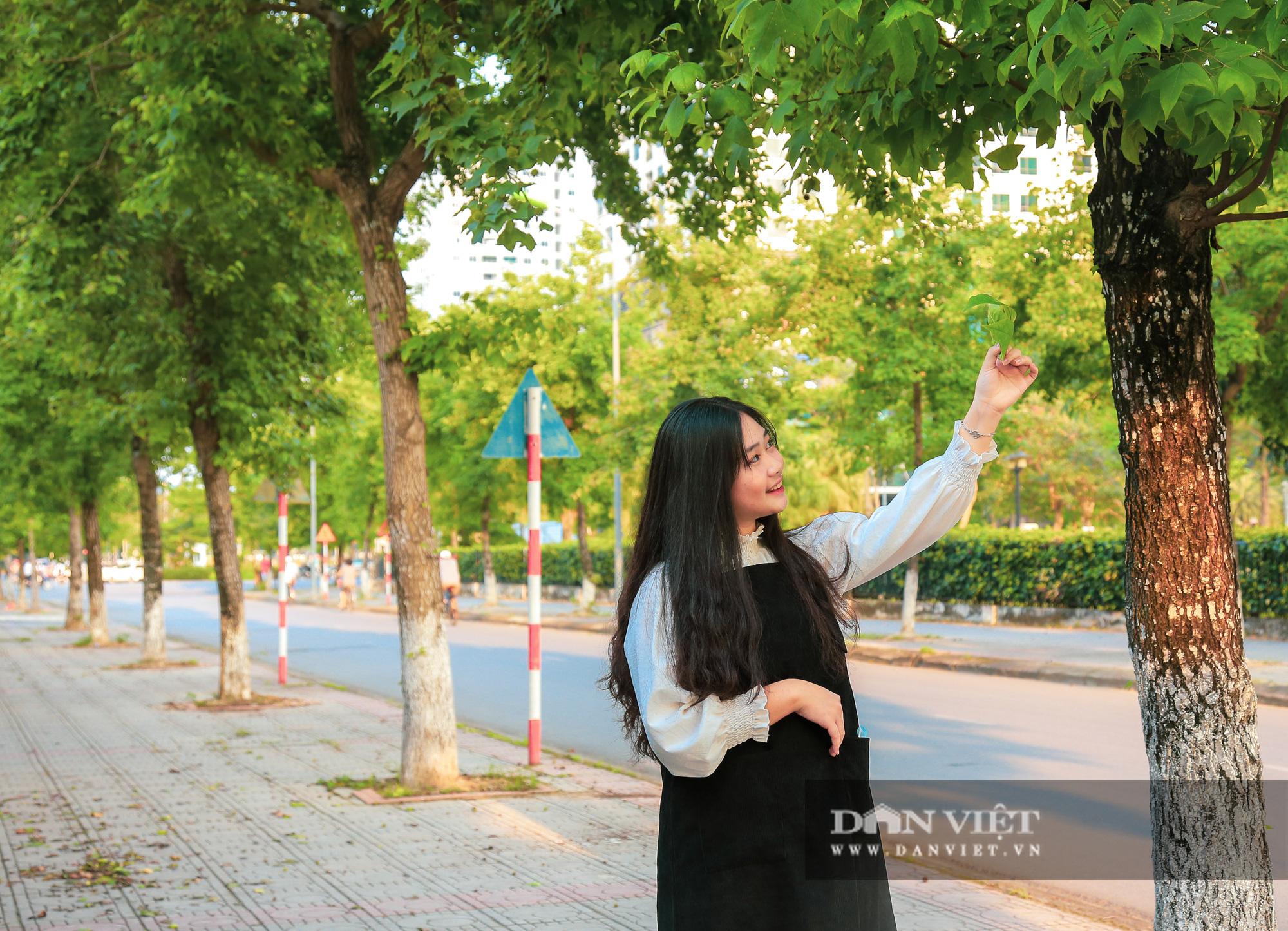 Ngỡ ngàng loài cây giống hệt phong lá đỏ xanh tốt giữa phố Hà Nội - Ảnh 11.