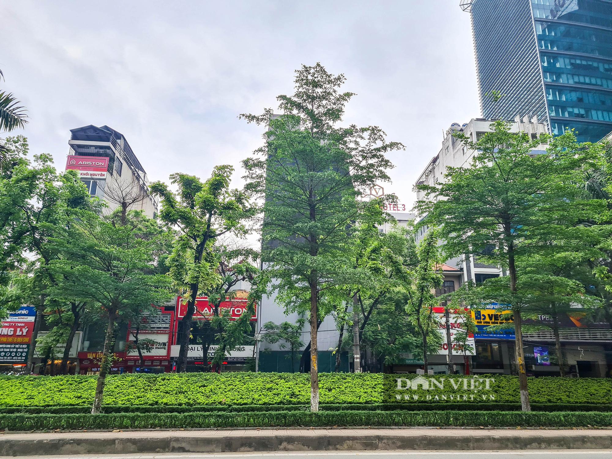 Điểm mặt những tuyến đường nhiều tầng cây xanh ở Hà Nội - Ảnh 9.