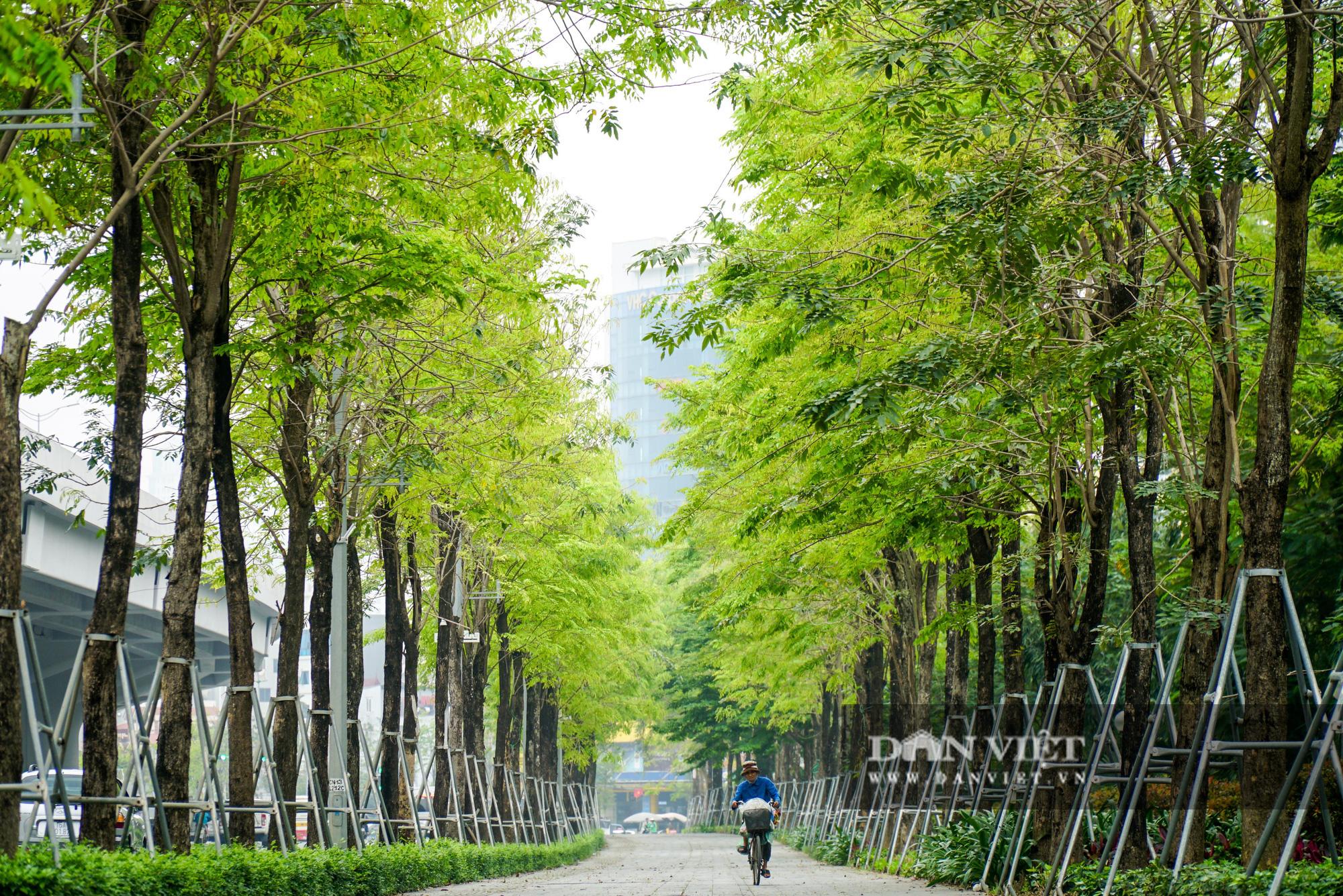 Điểm mặt những tuyến đường nhiều tầng cây xanh ở Hà Nội - Ảnh 2.