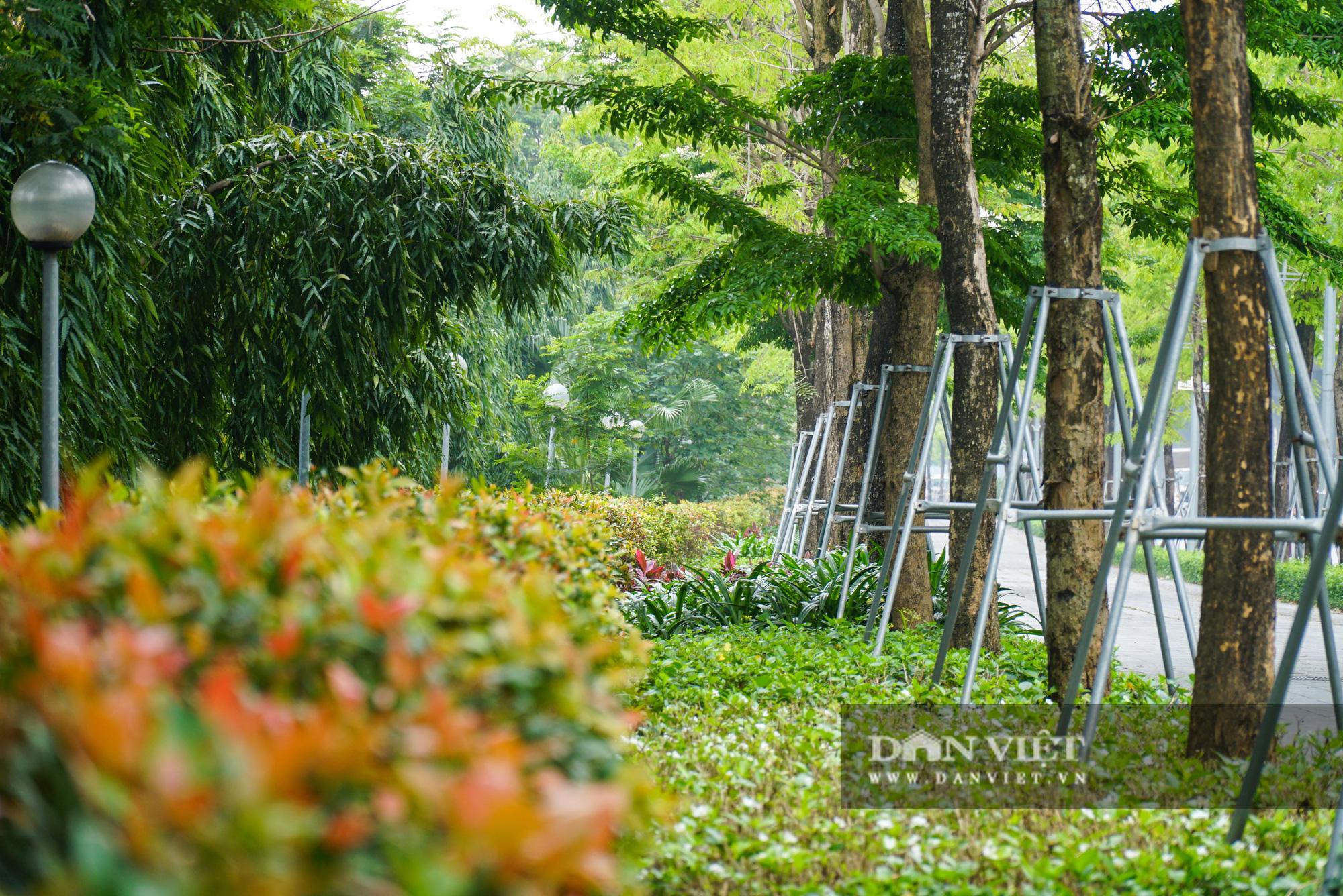 Điểm mặt những tuyến đường nhiều tầng cây xanh ở Hà Nội - Ảnh 3.