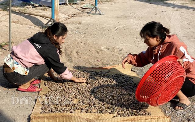 Cây điều góp phần giải quyết việc làm thường xuyên cho khoảng 44.000 lao động ở Bình Phước