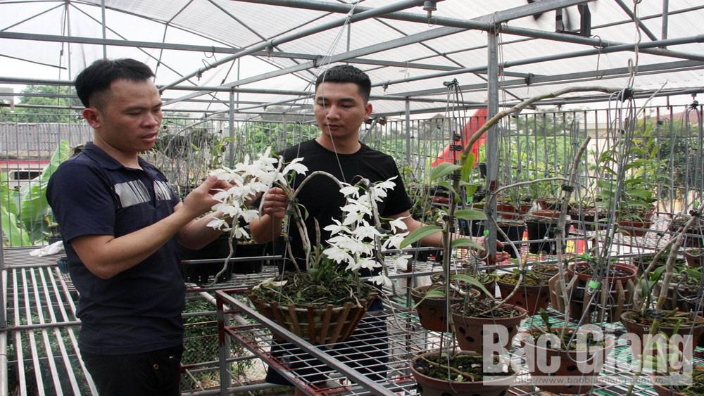 Bắc Giang: Vườn lan rừng tỏa hương khoe sắc trong nhà màng, bất ngờ cây lan rừng ra chuỗi hoa trắng như bạch ngọc - Ảnh 1.