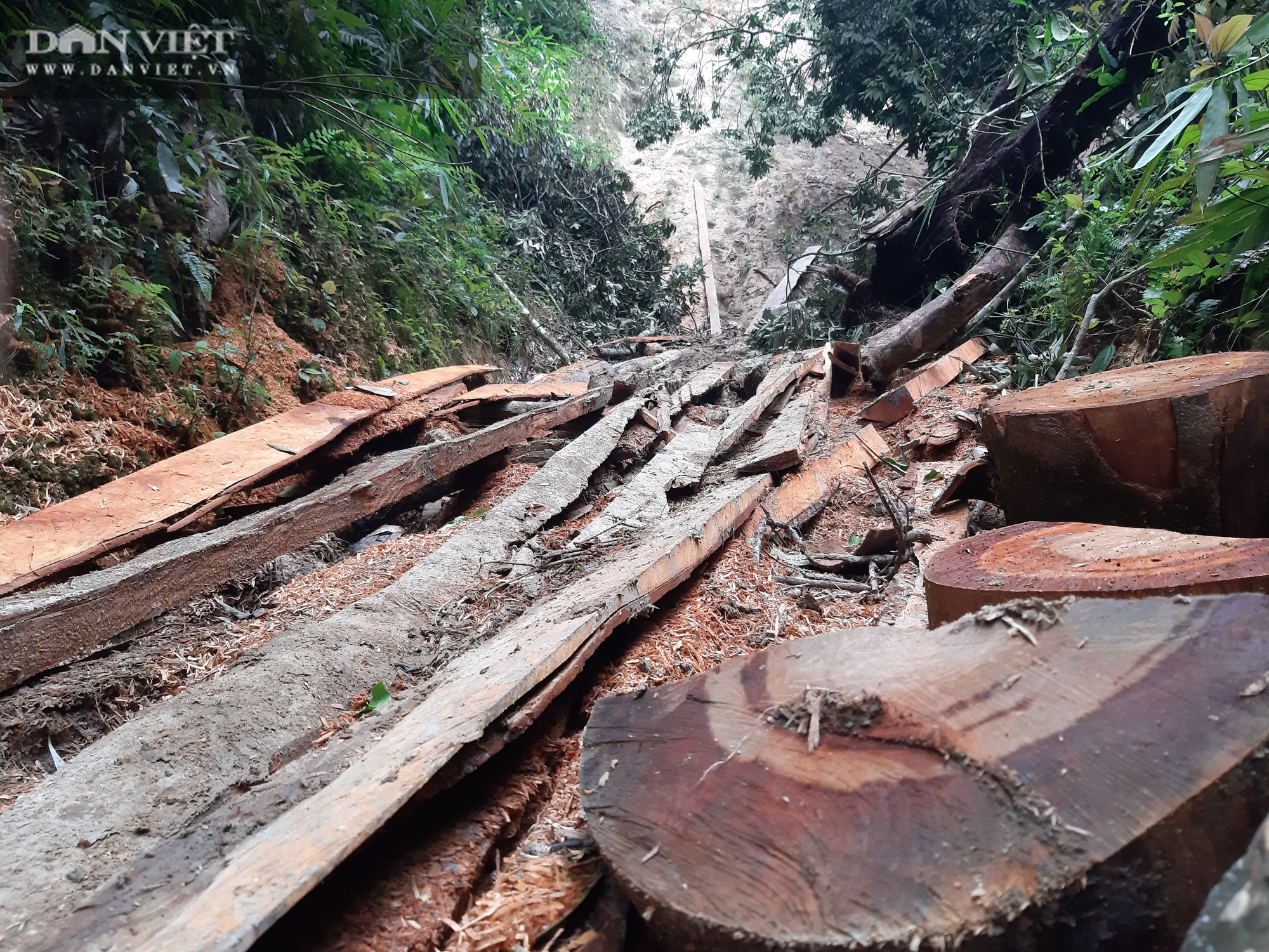 Tỉnh Lào Cai yêu cầu Kiểm điểm, làm rõ trách nhiệm cá nhân có liên quan vụ phá rừng pơ mu VQG Hoàng Liên - Ảnh 1.