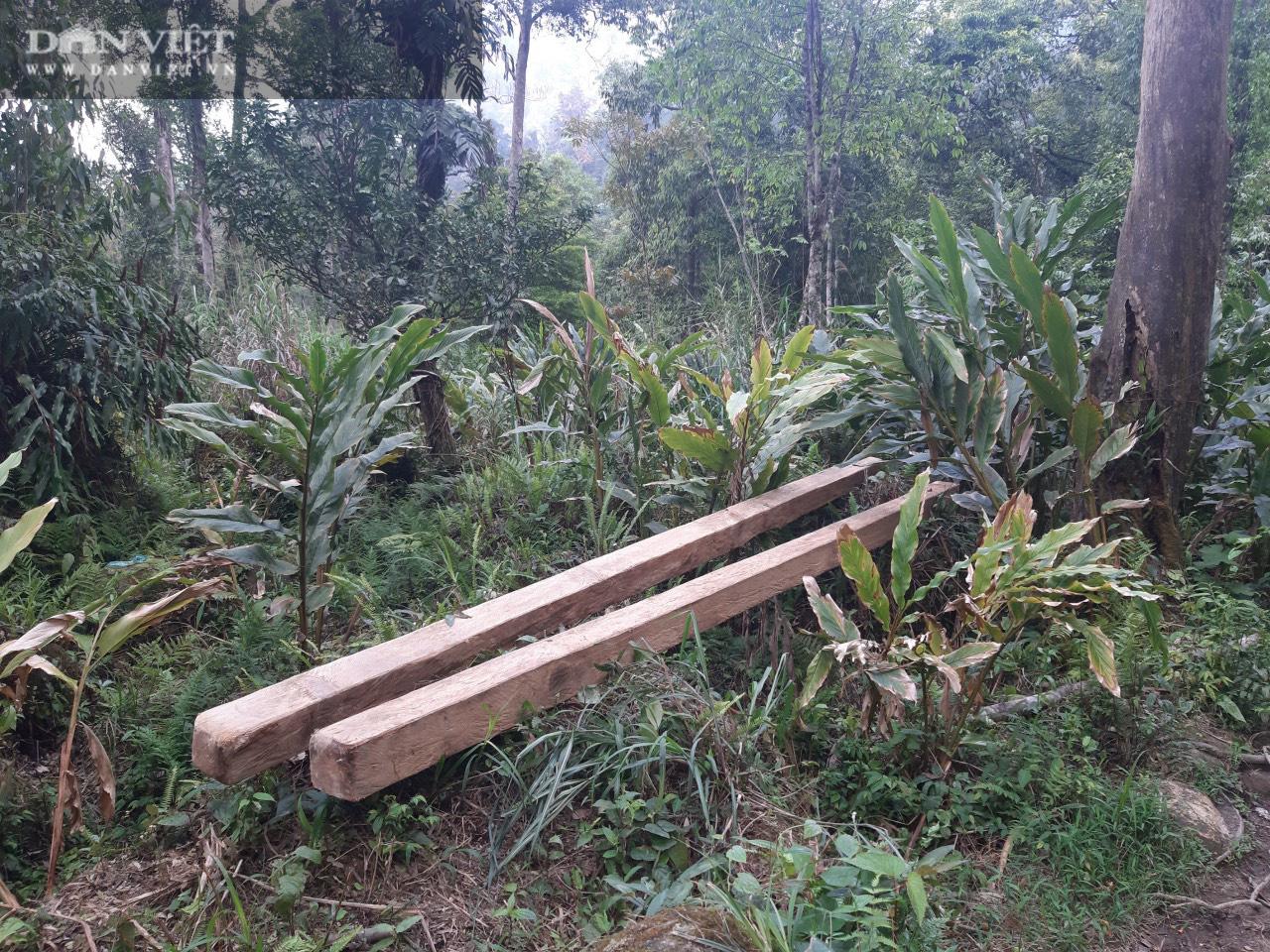 Tỉnh Lào Cai yêu cầu Kiểm điểm, làm rõ trách nhiệm cá nhân có liên quan vụ phá rừng pơ mu VQG Hoàng Liên - Ảnh 5.