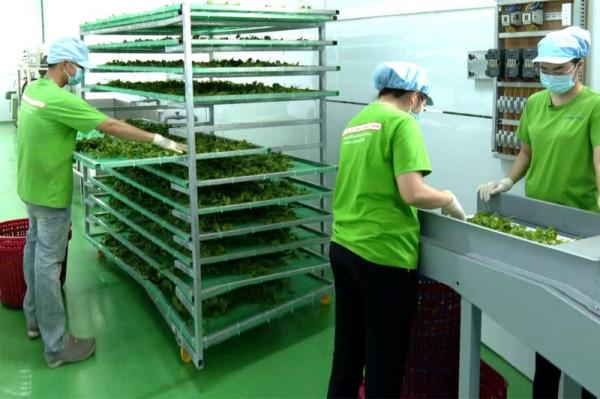 Nông sản Việt tăng giá và tăng tiềm năng xuất khẩu nhờ áp dụng công nghệ chế biến - Ảnh 1.