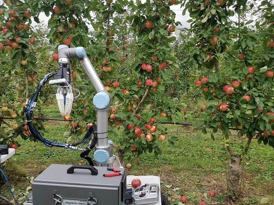 """Robot siêu đỉnh thu hoạch táo cứ 7 giây lại """"nhả ra"""" một trái táo - Ảnh 1."""