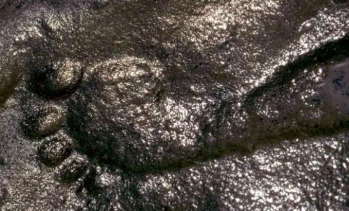 Phát hiện bí ẩn chấn động về dấu vết người đàn ông 290 triệu năm tuổi - Ảnh 2.