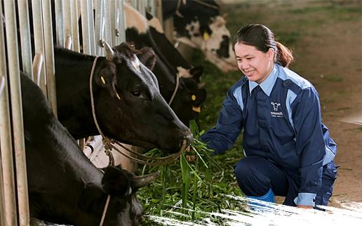 Rời công sở về quê nuôi bò sữa, cô gái trẻ thu nhập gần chục tỷ đồng mỗi năm
