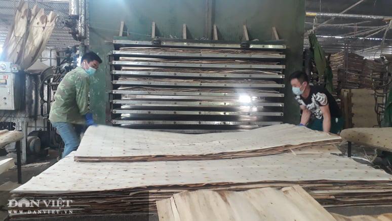 Thái Nguyên lão nông thu nhập hàng tỷ đồng từ nghề trồng rừng bóc gỗ - Ảnh 2.