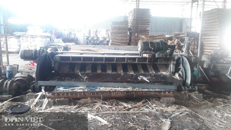Thái Nguyên lão nông thu nhập hàng tỷ đồng từ nghề trồng rừng bóc gỗ - Ảnh 3.