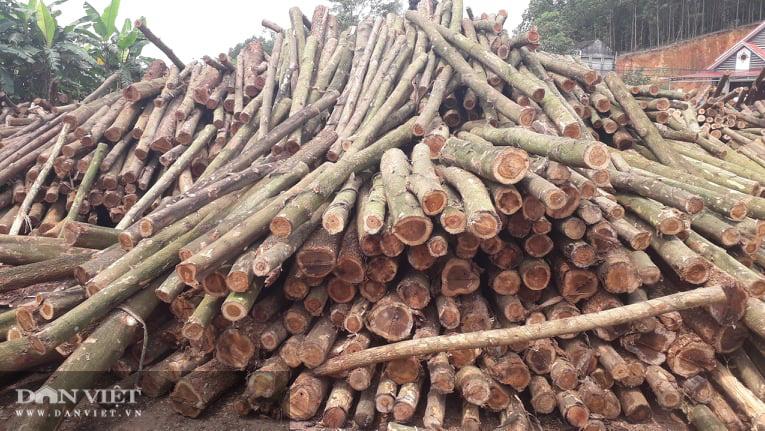 Thái Nguyên lão nông thu nhập hàng tỷ đồng từ nghề trồng rừng bóc gỗ - Ảnh 4.