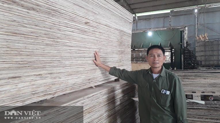 Thái Nguyên lão nông thu nhập hàng tỷ đồng từ nghề trồng rừng bóc gỗ - Ảnh 1.
