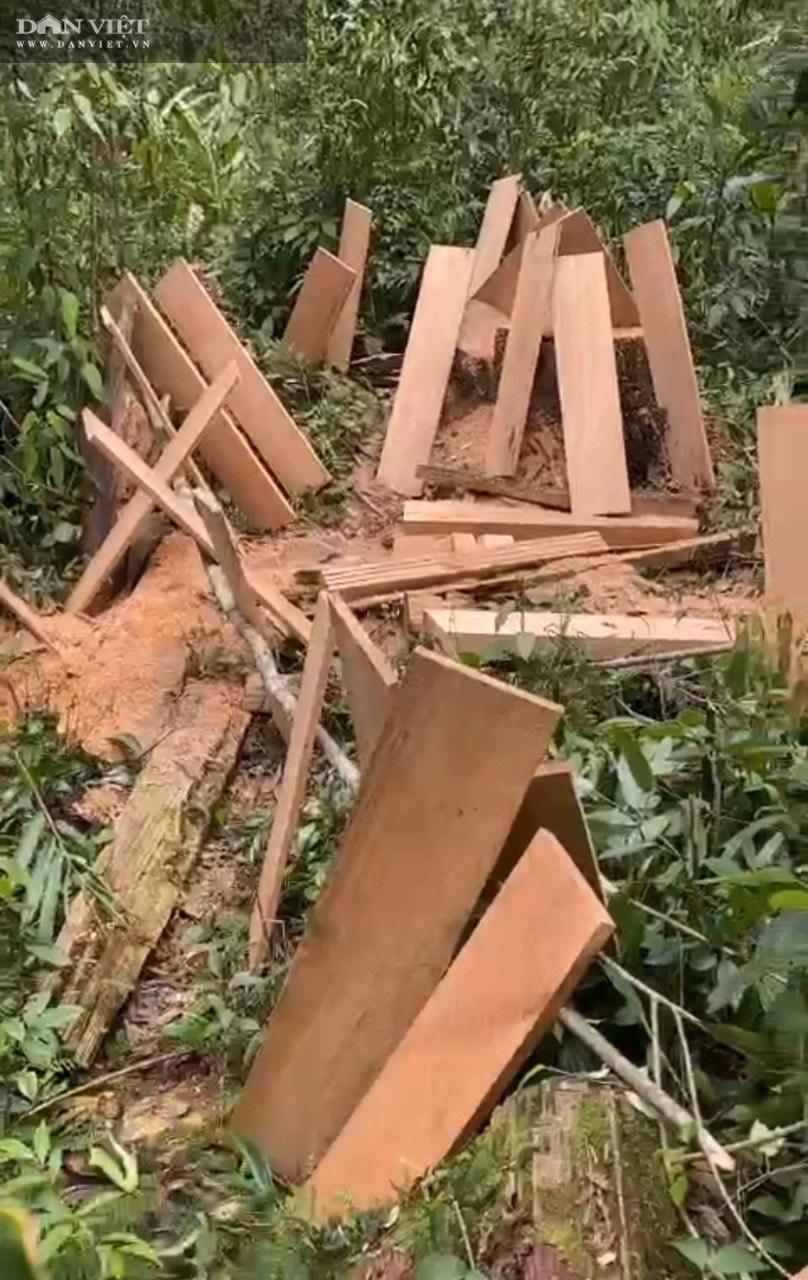Phá rừng pơ mu VQG Hoàng Liên: Chủ Vườn đã bỏ qua các vấn đề mấu chốt trong báo cáo gửi cấp trên! - Ảnh 8.