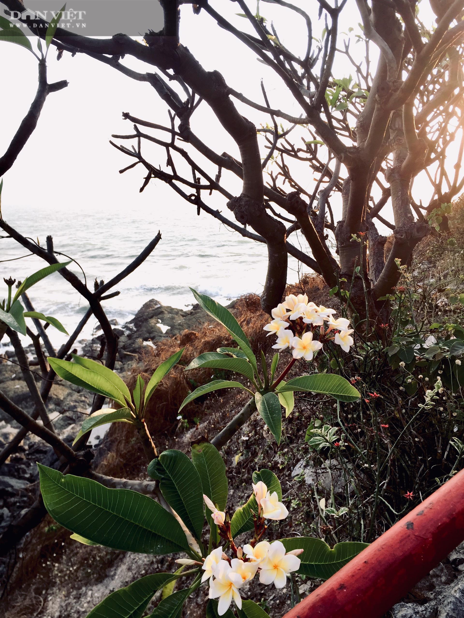 """Canh """"giờ vàng"""" lần theo con đường bí ẩn dưới nước đến thăm ngôi miếu có vị trí đặc biệt nhất Việt Nam - Ảnh 12."""