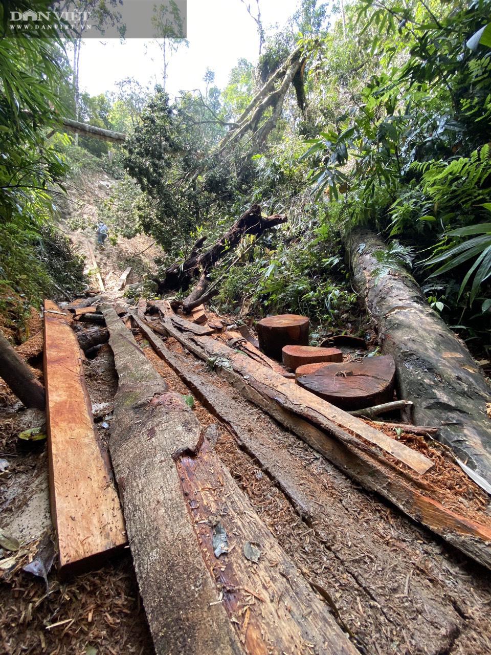 Phá rừng pơ mu VQG Hoàng Liên: Chủ Vườn đã bỏ qua các vấn đề mấu chốt trong báo cáo gửi cấp trên! - Ảnh 3.