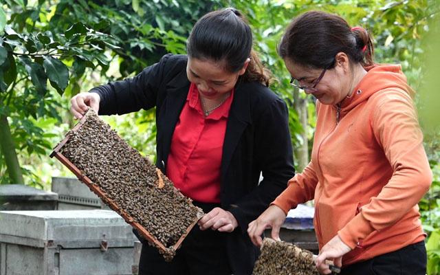 Trang trại nuôi ong lấy mật ở huyện Tân Phú, Đồng Nai. Ảnh: Ngọc Diệu