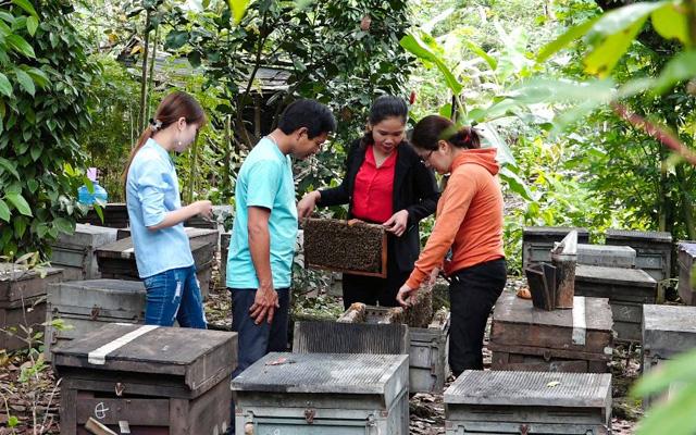 Việt Nam có khoảng 35.000 người nuôi ong, phần lớn là nông dân sống ở nông thôn, miền núi, vùng kinh tế khó khăn… Ảnh: Ngọc Diệu