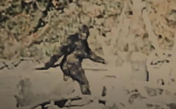 Huyền thoại Bigfoot xuất hiện trong vụ thảm sát tại trang trại trồng cần sa - Ảnh 2.