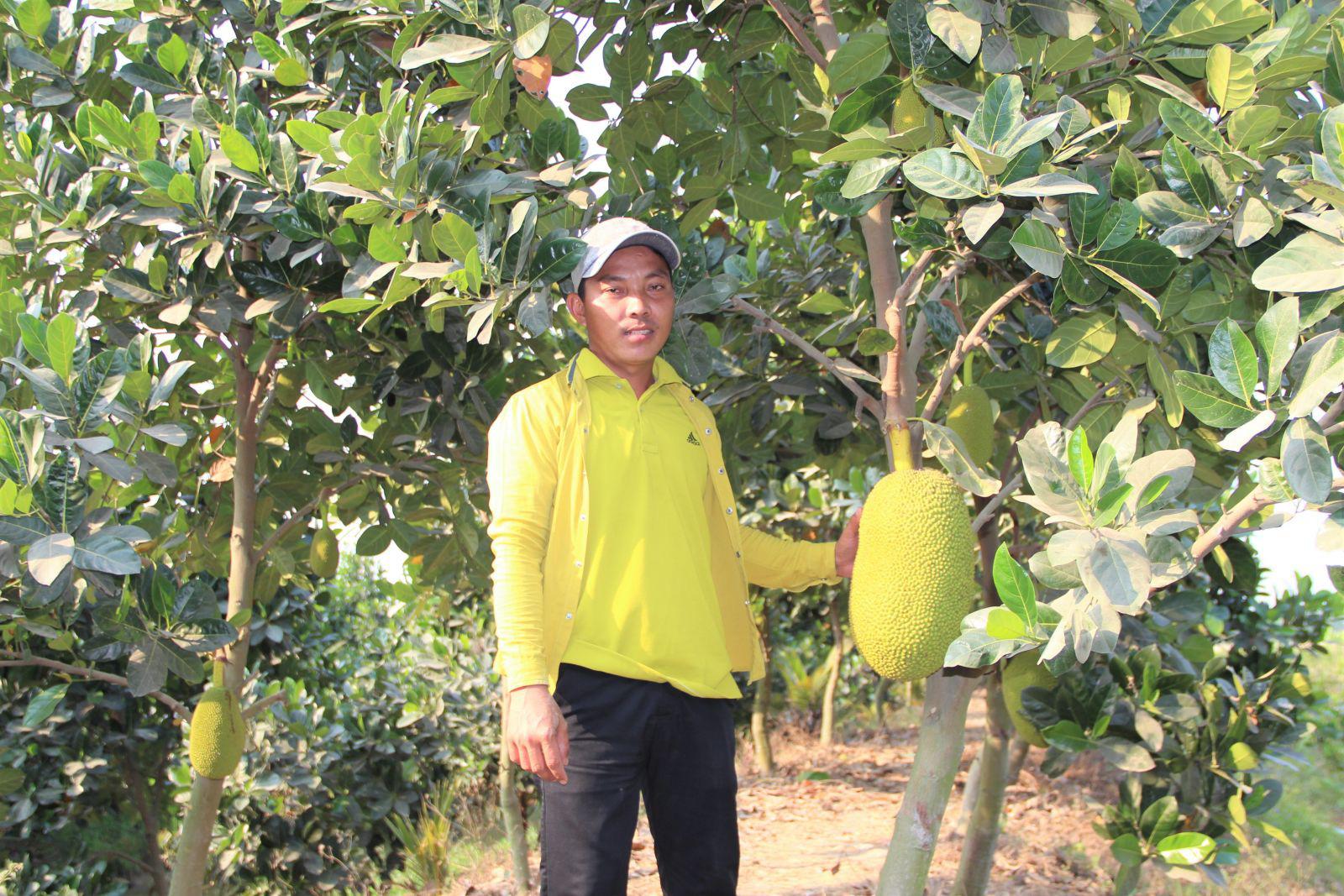 """Long An: Nông dân trồng cây ăn trái đang làm cách nào để """"né"""" hạn mặn, nắng nóng trong mùa khô? - Ảnh 1."""