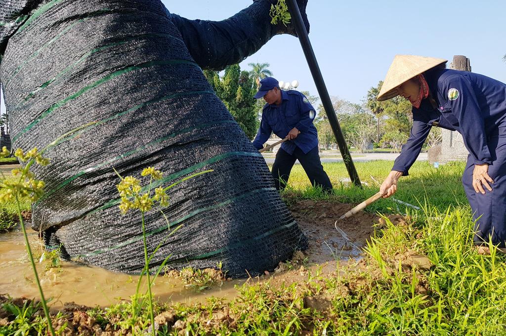 """Trên cả tuyệt vời, sau 5 tháng """"cấp cứu"""", cây xà cừ hơn 100 năm tuổi ở Huế đã mọc đầy chồi biếc - Ảnh 5."""
