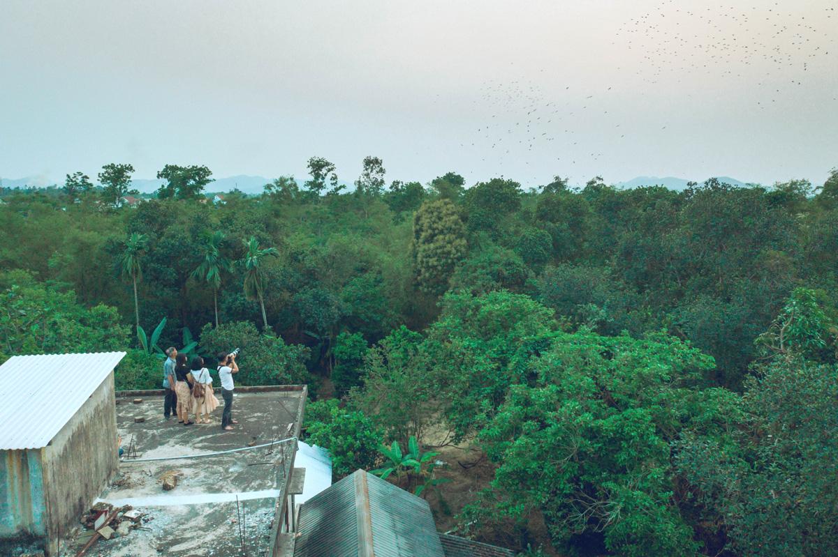 Ngắm đàn cò bợ hàng trăm con bay trắng một góc trời ở thành phố Huế - Ảnh 2.