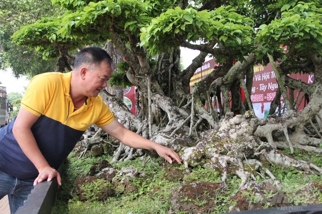 Đăk Lăk: Cây sanh cổ rong rêu phủ đầy có chu vi bộ rễ 10m, cao 3,7m, trả giá nào chủ cũng lắc đầu - Ảnh 4.