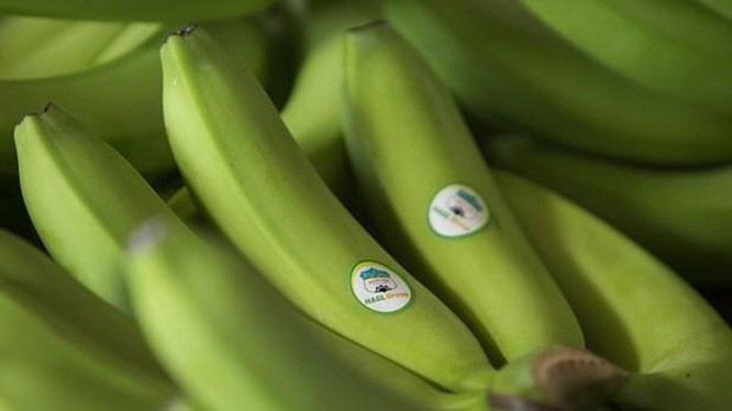 Doanh thu mảng trái cây của HAGL Agrico giảm 580 tỷ so với cùng kỳ - Ảnh 1.