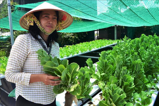"""Tây Ninh: Nông dân nuôi 10.000 con côn trùng đặc sản, thoạt nhìn thấy nhiều người kêu lên """"quê tôi con này đã tuyệt chủng"""" - Ảnh 5."""