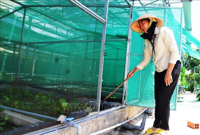 """Tây Ninh: Nông dân nuôi 10.000 con côn trùng đặc sản, thoạt nhìn thấy nhiều người kêu lên """"quê tôi con này đã tuyệt chủng"""" - Ảnh 3."""