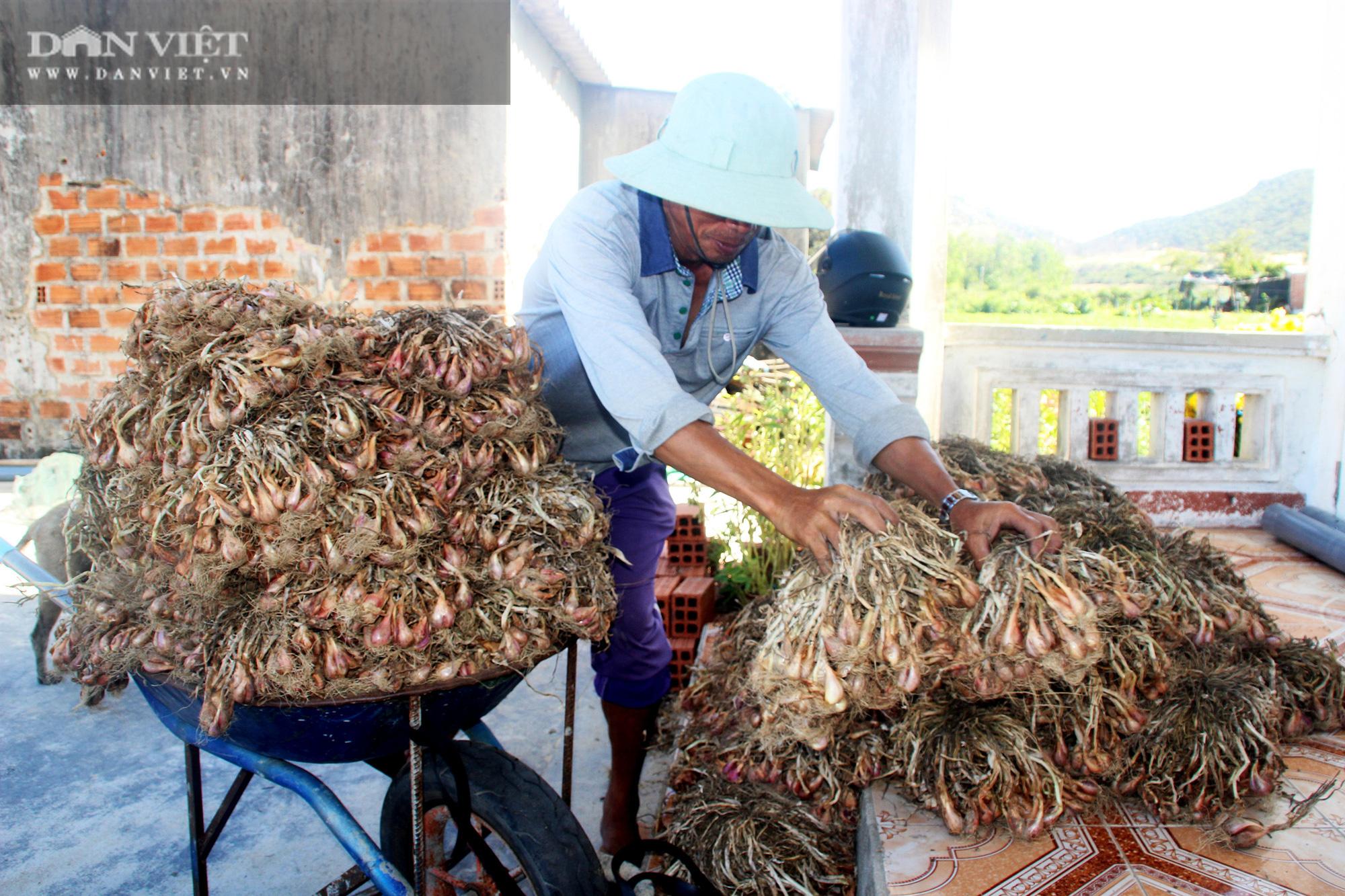 """Giá hành tím bất ngờ hạ giá, bán 1kg không mua nổi ổ bánh mì, nông dân Bình Định lao vào cú """"sốc"""" - Ảnh 3."""