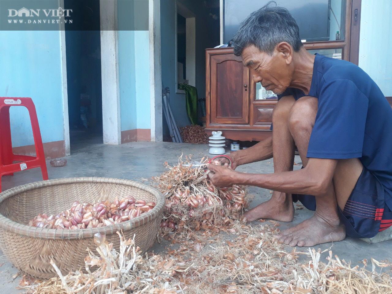 """Giá hành tím bất ngờ hạ giá, bán 1kg không mua nổi ổ bánh mì, nông dân Bình Định lao vào cú """"sốc"""" - Ảnh 4."""