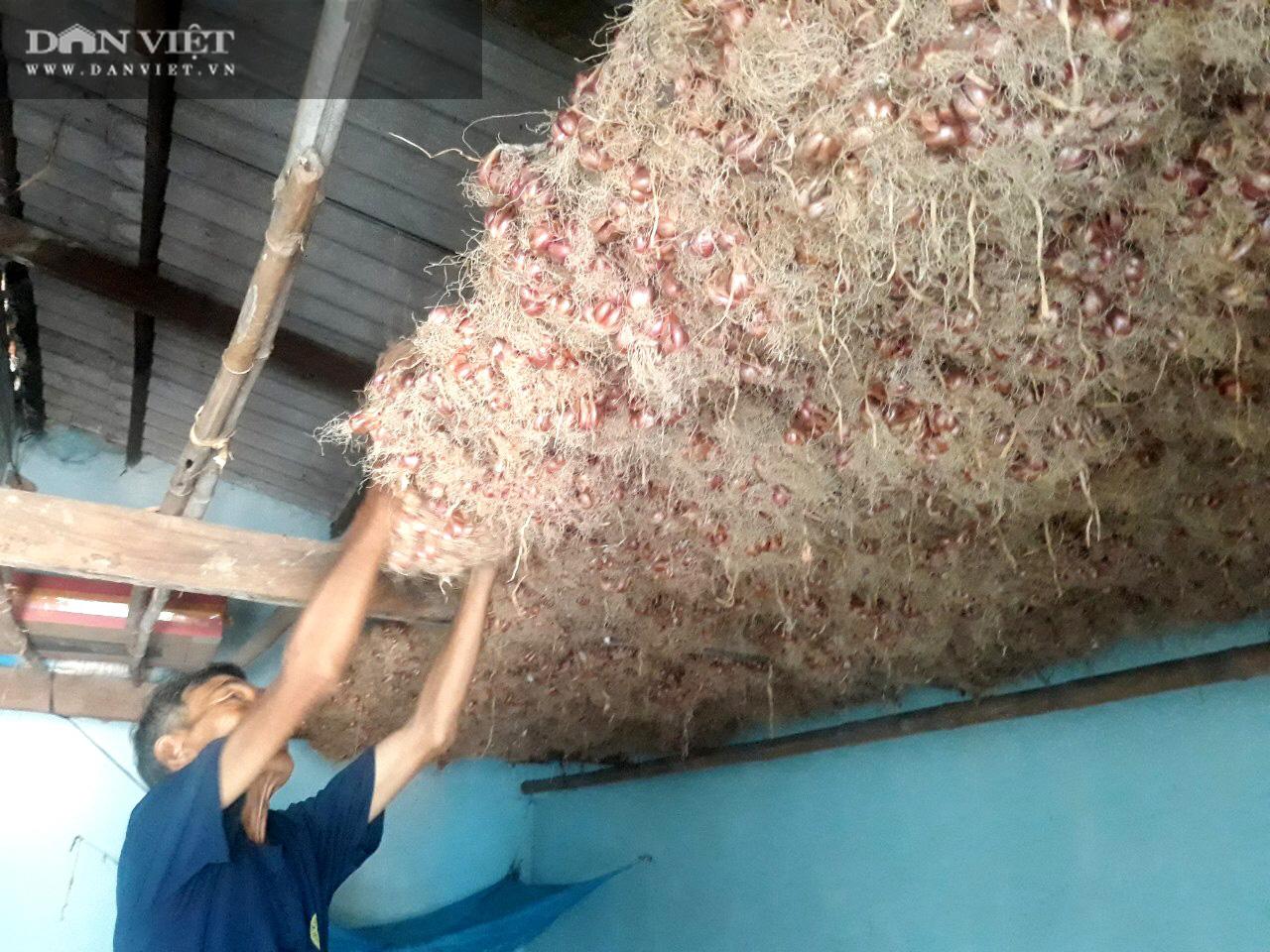"""Giá hành tím bất ngờ hạ giá, bán 1kg không mua nổi ổ bánh mì, nông dân Bình Định lao vào cú """"sốc"""" - Ảnh 1."""