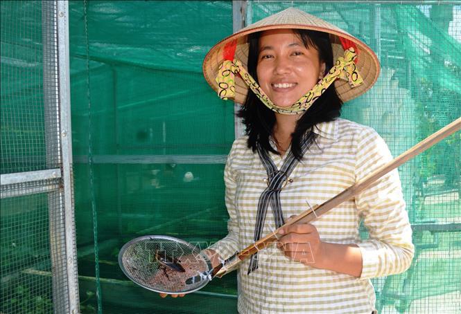 """Tây Ninh: Nông dân nuôi 10.000 con côn trùng đặc sản, thoạt nhìn thấy nhiều người kêu lên """"quê tôi con này đã tuyệt chủng"""" - Ảnh 1."""