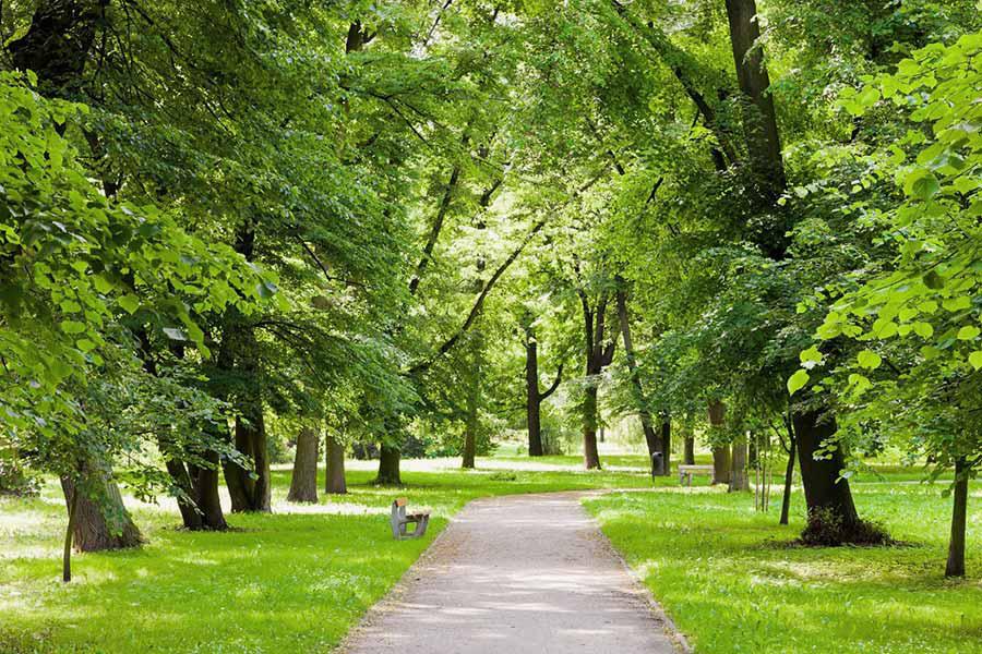 Các thành phố ở Mỹ đối diện với nỗi lo mất 36 triệu cây xanh mỗi năm - Ảnh 1.