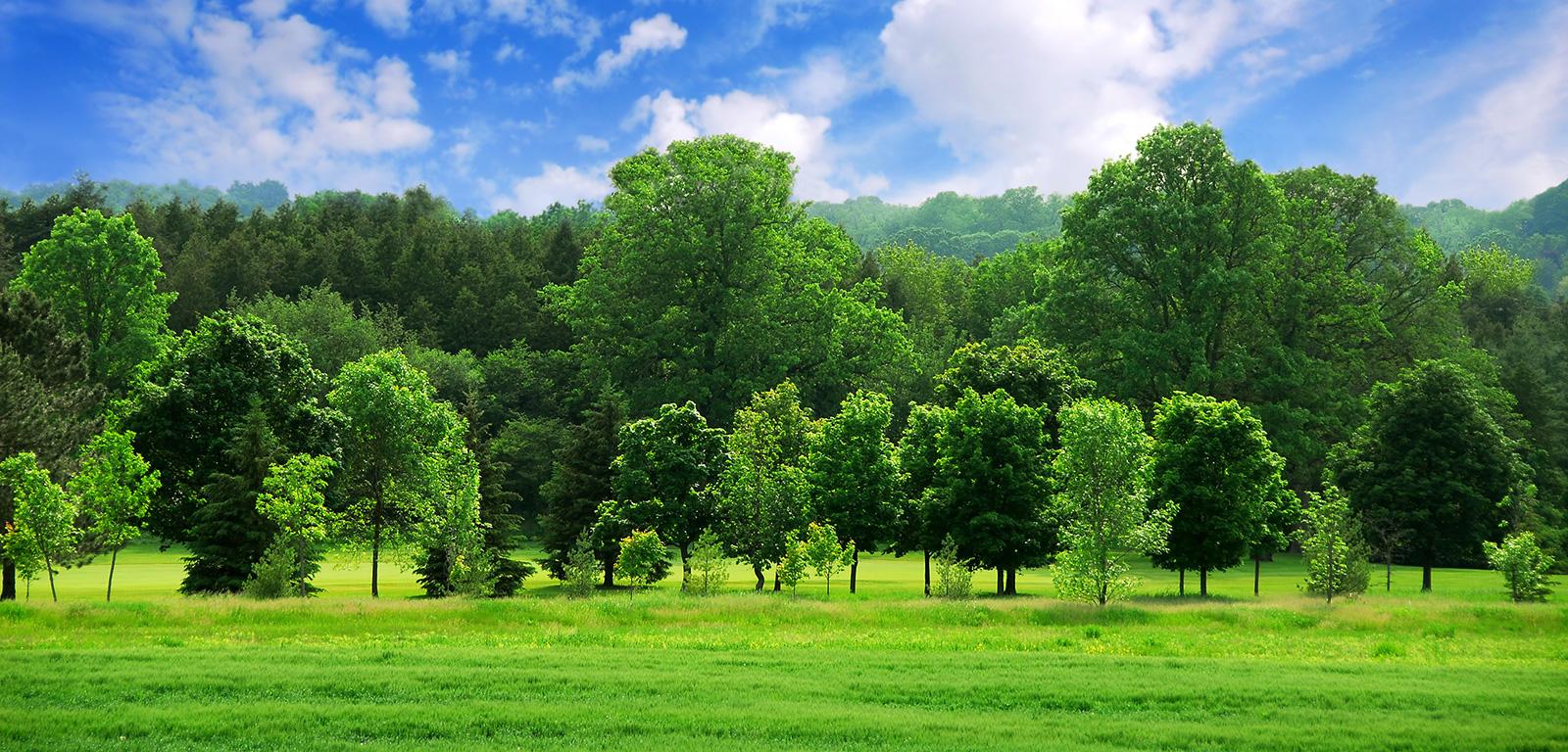 Các thành phố ở Mỹ đối diện với nỗi lo mất 36 triệu cây xanh mỗi năm - Ảnh 2.