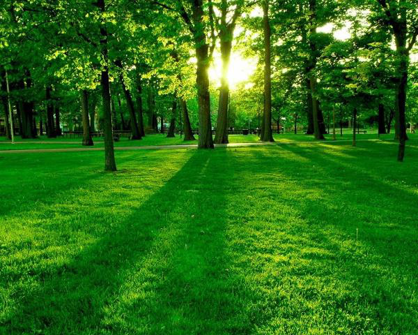 Các thành phố ở Mỹ đối diện với nỗi lo mất 36 triệu cây xanh mỗi năm - Ảnh 3.